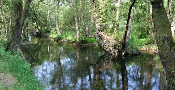 Rio Uncin desembocadura en la Concha de Artedo